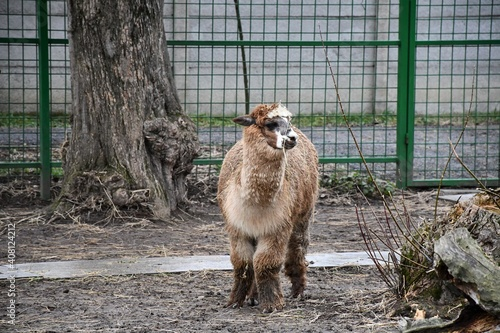 Fotografiet Beautiful animals kept in captivity