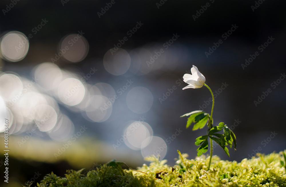 Fototapeta piękny kwiat