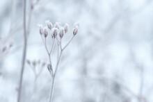 Pflanzenstruktur Raureif Mir Unscharfen Hintergrund Querformat Weiß