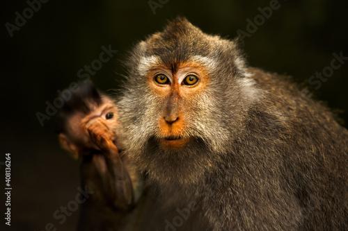 Wild Monkey Family