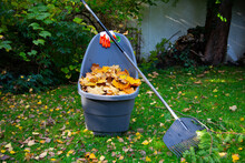 A Container Full Of Collected Autumn Leaves And A Rake On A Lawn During Autumn Garden Works.