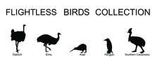 Flightless Birds Collection Vector Silhouette Illustration Isolated On White Background. Ostrich, Emu, Kiwi, Penguin And Cassowary. Unusual Endemic Bird Group. Wildlife Exotic Animal.