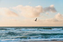 Stormy Sea, Beautiful Cloudy Sky And Flying Pelican. Pacific Ocean, California