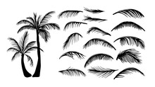 Palm Trees. Palm Leaves. Vector Illustration