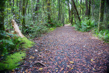 Path Leading Through Regenerated Forest Around And Near Lake Wilkie In Catlins.