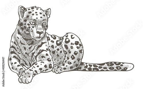Stampa su Tela Leopard animal resting on ground monochrome sketch