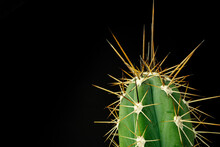Macro Photo Of Green Cactus With Spines