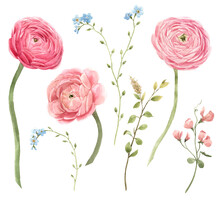 Beautiful Floral Set With Watercolor Gentle Red Spring Ranunculus Flowers. Stock Bouquet Illustration.