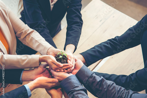 Fototapeta Hands adult business Team Work partnership harmony Cupping young Plant and seeding Nurture grow Environmental and reduce global warming help earth, top view obraz
