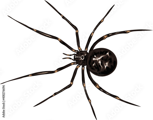 Stampa su Tela Spider - detailed vector cross isolated on white