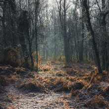 Morning Light Filtering Through To The Frozen Forest Floor