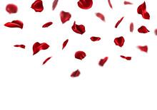 Falling Red Rose Petals Isolated On White Background. Romantic Wedding Valentine Abstract Vector Illustration.