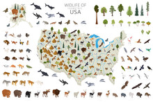 Isometric 3d Of USA Wildlife. Animals, Birds And Plants Constructor Elements Isolated On White Set. Build Your Own Geography Infographics Collection.
