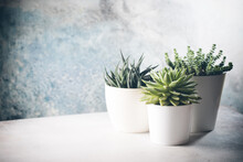 Succulents In A White Pots On A Light Background, Minimalist Composition