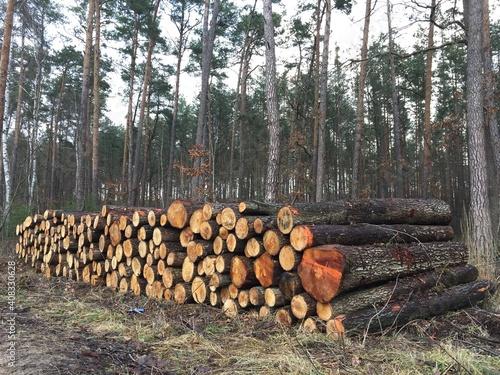 Fototapeta drewna, bory, drzew, dzienniki, drewno na opał, charakter, pryzma, jesienią, drewno, ciąć, dzienniki, graty, drzew, stos, zieleń, woodpile, sosna, bagażnik, leśnictwa, rejestrowanie, naturalny, wylesi obraz