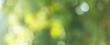 Leinwandbild Motiv Blurred greenery leaves of tree forest