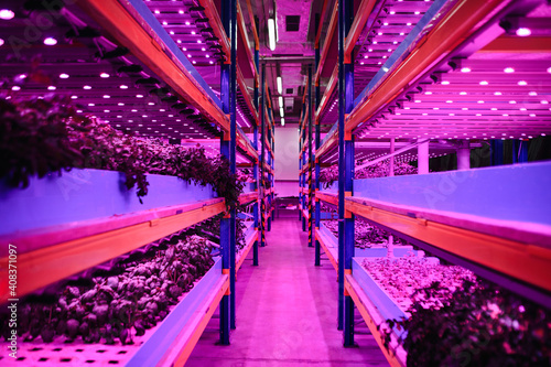 Obraz Aquaponic farm, sustainable business and artificial lighting. - fototapety do salonu