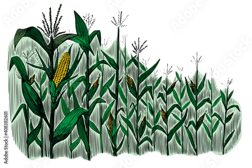 Canvas Print Black corn field sketch in vintage style on white background