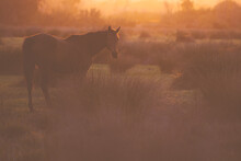 Lone Horse In Paddock With Long Grass In Golden Afternoon Light