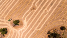Aerial View Of Harvesting A Cereal Crop