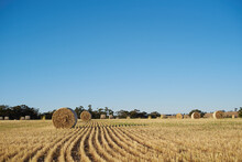 Bales Of Hay In A Paddock Under Clear Blue Sky.