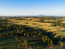 Long Shadows In Paddock Of Gum Trees And Green Grass In Hunter Valley