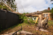Large Tree Fallen On An Outdoor Shed