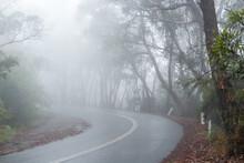 Wet Road Curving Through Fog
