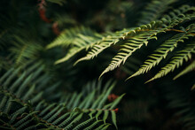 Close Up Of A Fern
