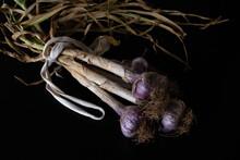 Organic Purple Garlic Bulbs, Hung To Dry