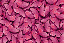 Shades Of Pink. Wings Of A Butterfly Morpho. Flight Of Bright Pink Butterflies Abstract Background.