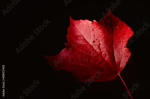 Red autumn leaf with water drops raining down