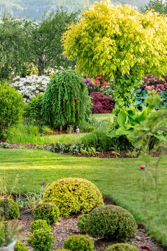 Różnorodność roślin w ogrodzie, soczysta zieleń wiosenna, w maju, gdy kwitną różaneczniki i rododendrony