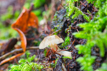 Mushrooms In The Woods With Moss