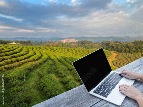 Obraz na plátne Hand typing laptop on wooden table over tea field background.