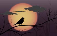 Bird Silhouette On Tree