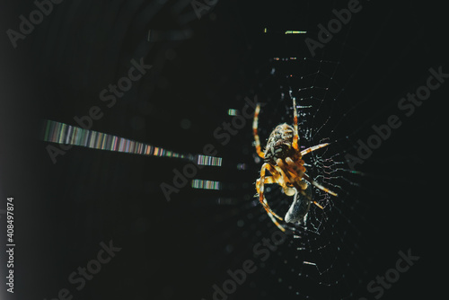 Fotografia spider on a web caught a bug on a dark background, selective focus