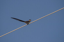 Low Angle Shot Of A Birds Sitting On The Wire With Blue Sky In The Background