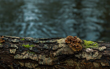 Tree Mushrooms False Turkey Tail And Deep Cold Water On The Background.