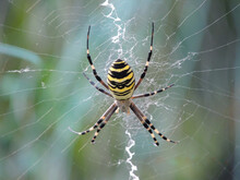 Spider On The Web