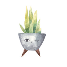 Home Flower, Sharp Leaves-branches, Succulent Child Watercolor Illustration On White Background