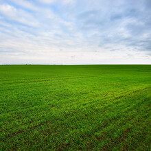 Panoramic View Of The Green Countryside Agricultural Plowed Field With A Tractor Tracks At Sunset. Beautiful Cloudscape. Classical Rural Scene. Warm Winter. Climate Change Theme. Latvia