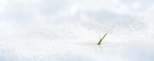 A Green Blade Of Grass Grows From Under The Snow