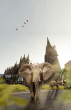 Elephant In The City Of Cologne, Photomontage