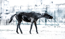 View Of A Horse On Snow Covered Land