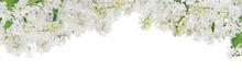 Isolated Pure White Lilac Lush Stripe