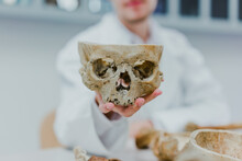 Close-up Of Doctor Or Medic Hand Holding Human Skull In White Uniform