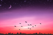 Silhouette Birds Flying In Sky At Night