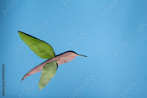 Canvas Print Troquilino hecho con hojas sobre fondo azul