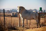 White pony standing at a fence. Winter landscape photo